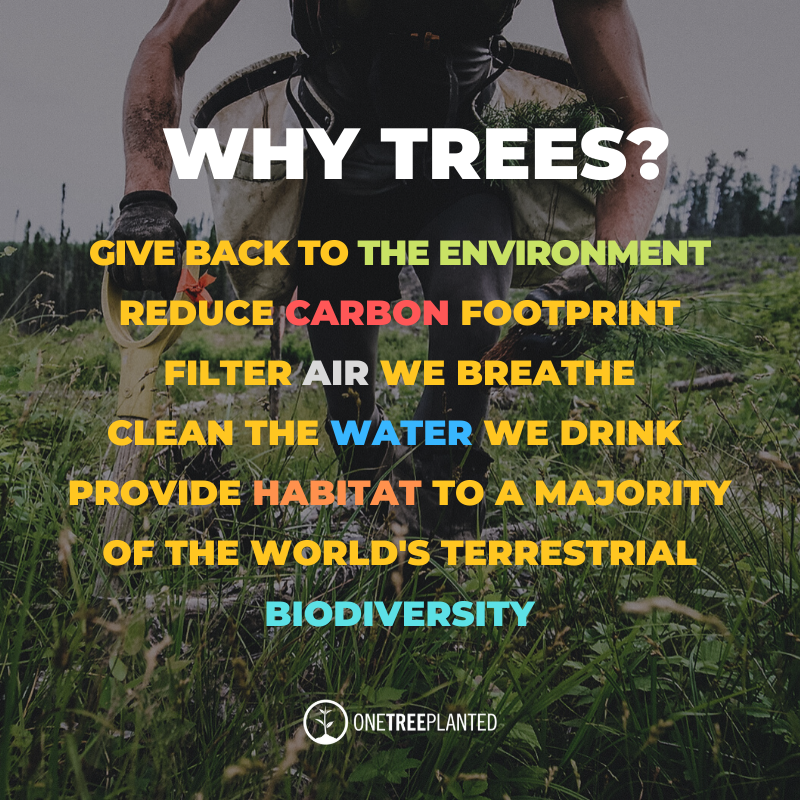 Why Plant Trees?